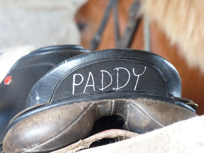 Saddle photo